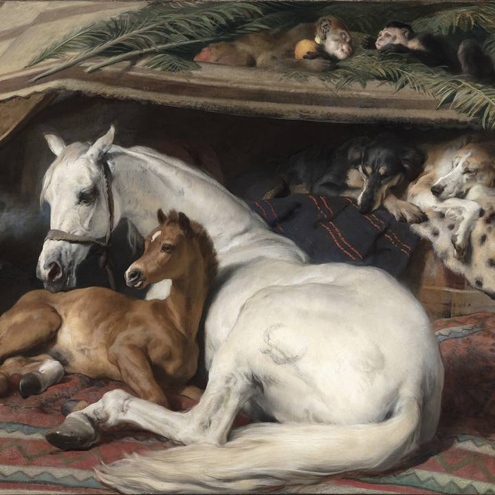Brief Encounter: Edwin Landseer, The Arab Tent