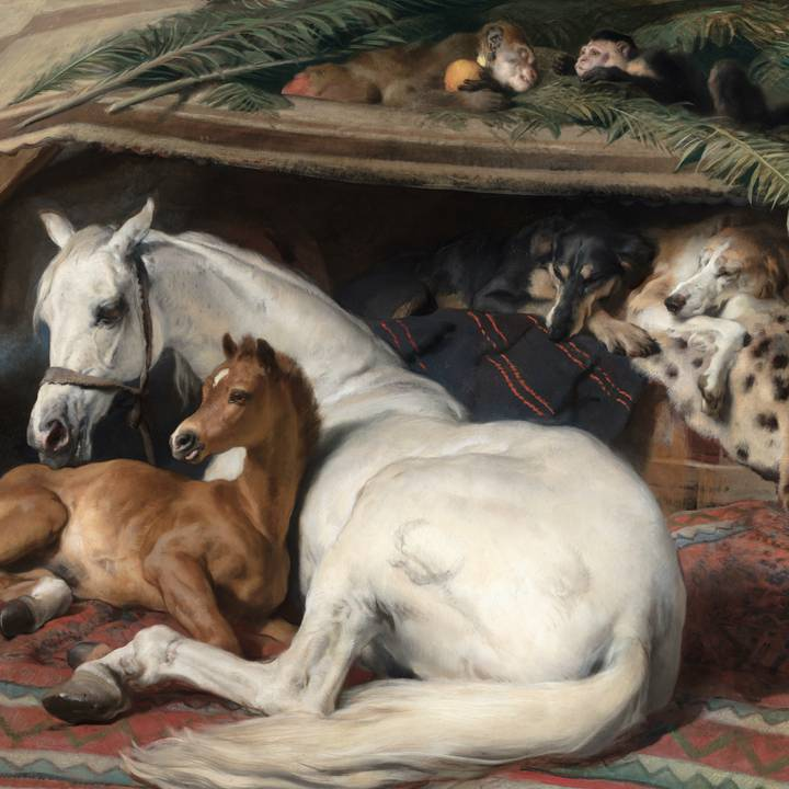 White horse and brown foal lying on rug with two monkeys and dogs in background