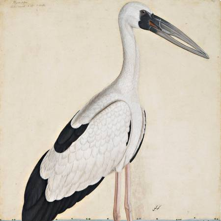 Unknown Artist Asian Openbill Stork in a Landscape_Courtesy Private Collection.jpg