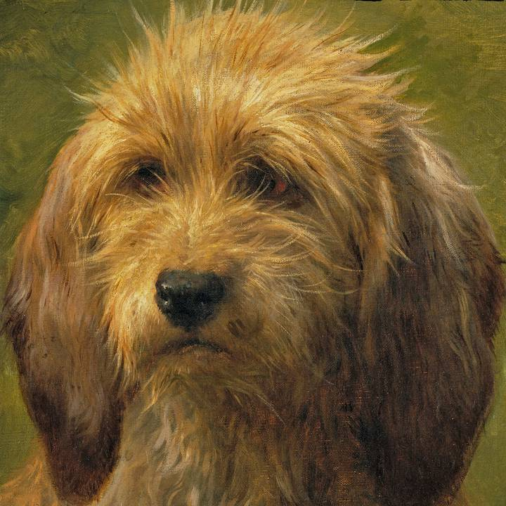 Brief Encounter: Two Portraits of Dogs
