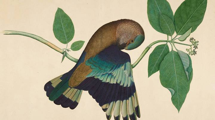 Shaikh Zain al-Din_Indian Roller on Sandalwood Branch__© Minneapolis Institute of Art.jpg